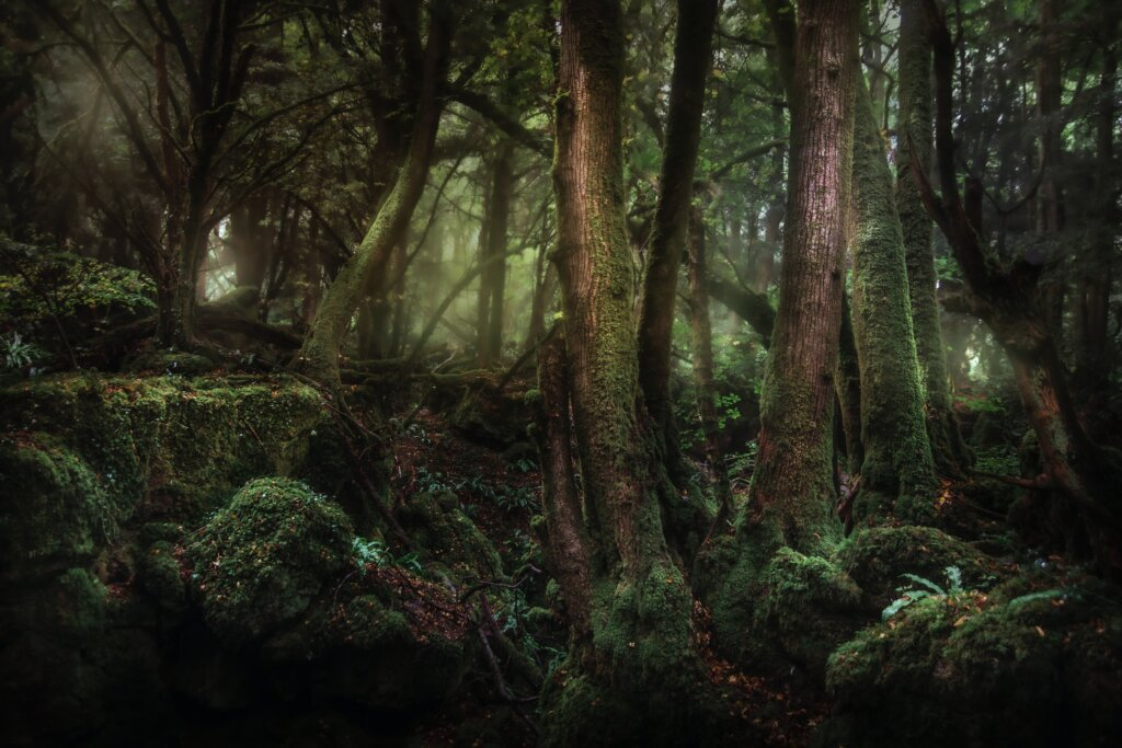 Puzzlewood Forest in the UK